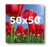 Canvas 050x050